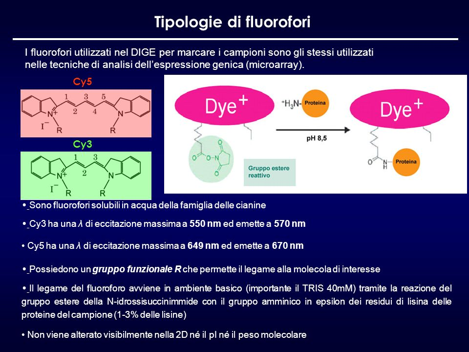 Tipologie di fluorofori