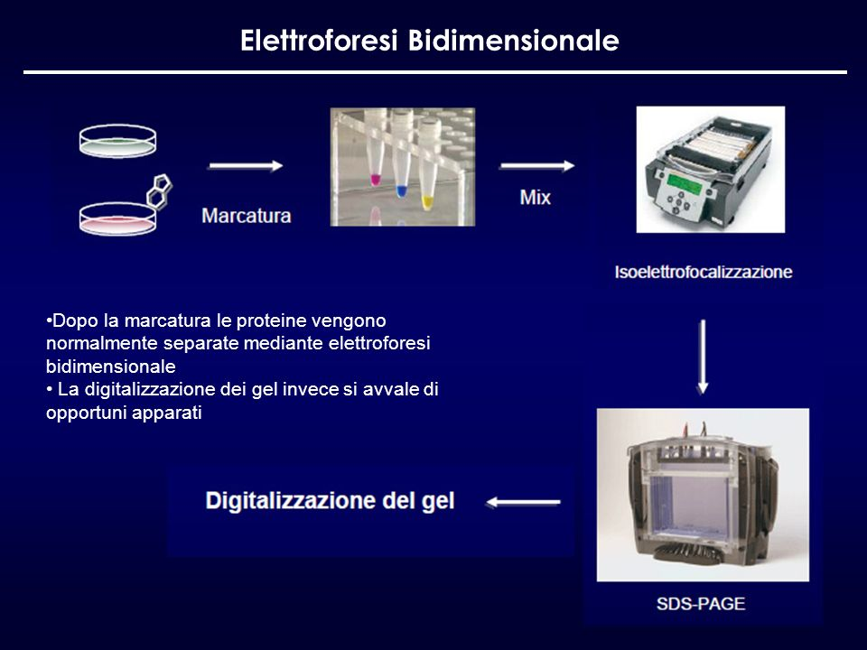 Elettroforesi Bidimensionale