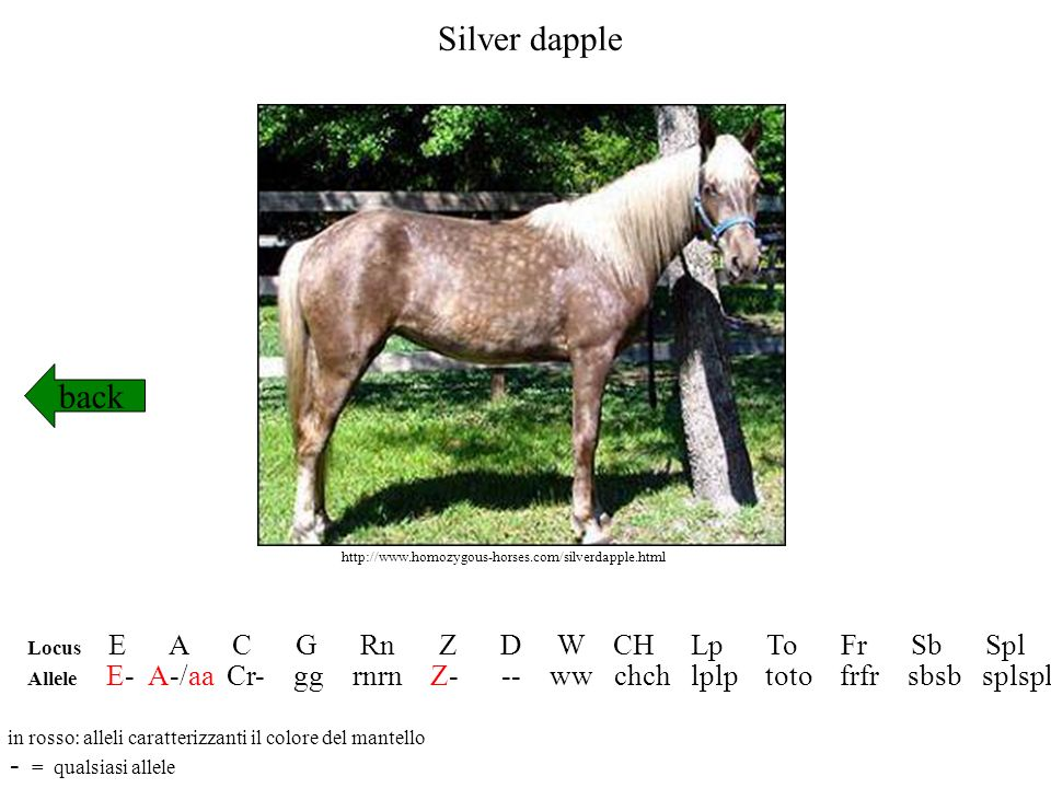 Silver dapple back - = qualsiasi allele