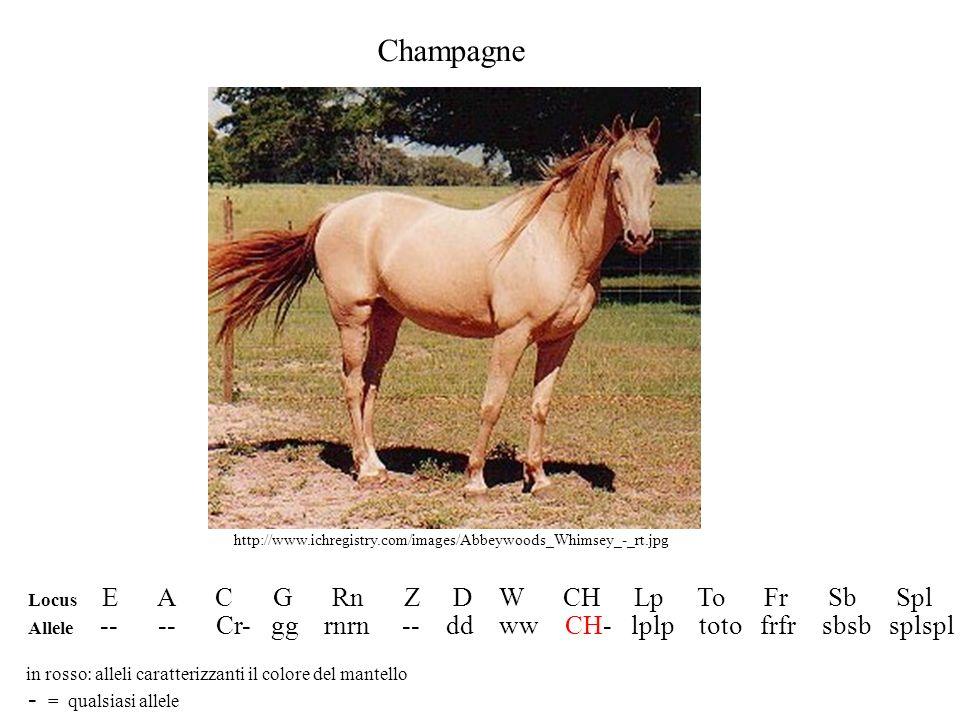Champagne - = qualsiasi allele