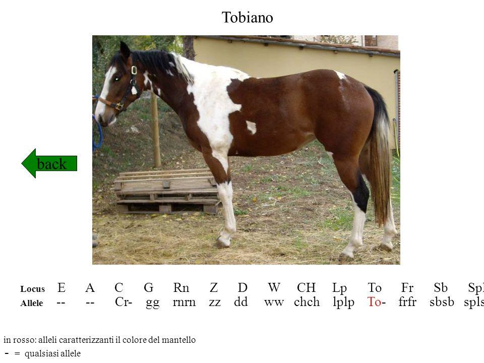 Tobiano back - = qualsiasi allele