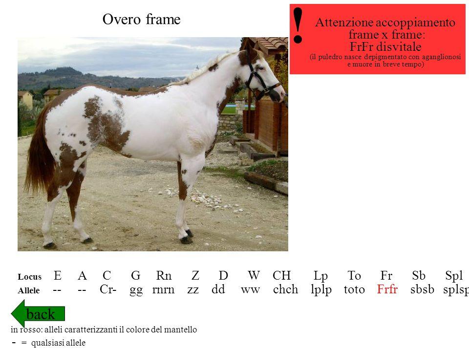 ! Overo frame back Attenzione accoppiamento frame x frame: