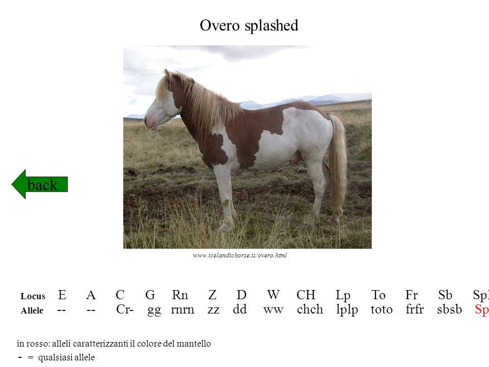 Overo splashed back - = qualsiasi allele