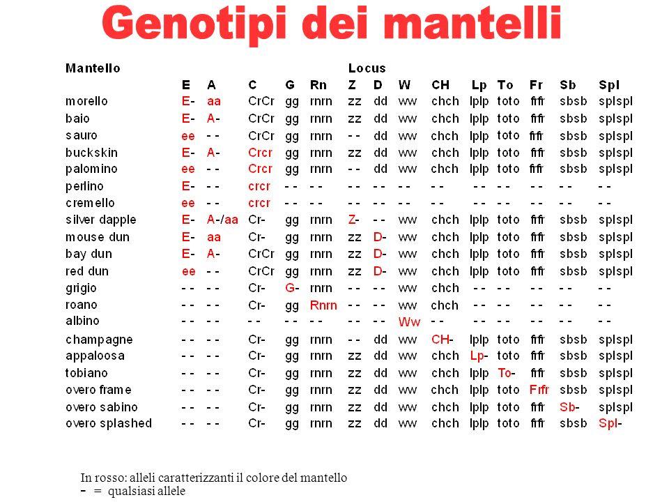 Genotipi dei mantelli - = qualsiasi allele