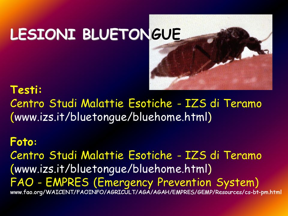 LESIONI BLUETONGUE Testi: