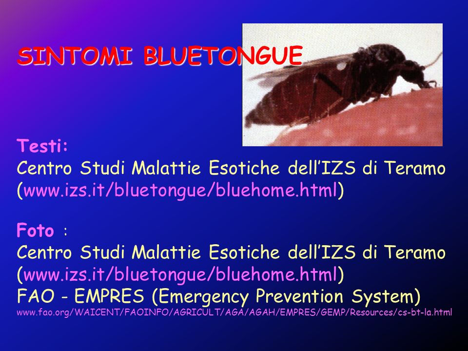 SINTOMI BLUETONGUE Testi: