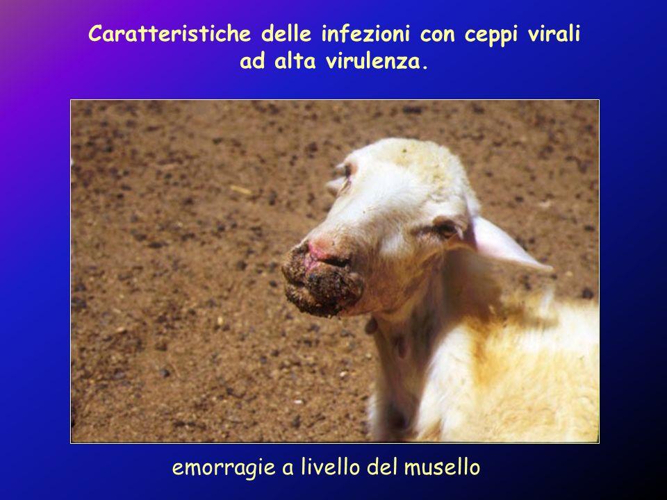 Caratteristiche delle infezioni con ceppi virali ad alta virulenza.