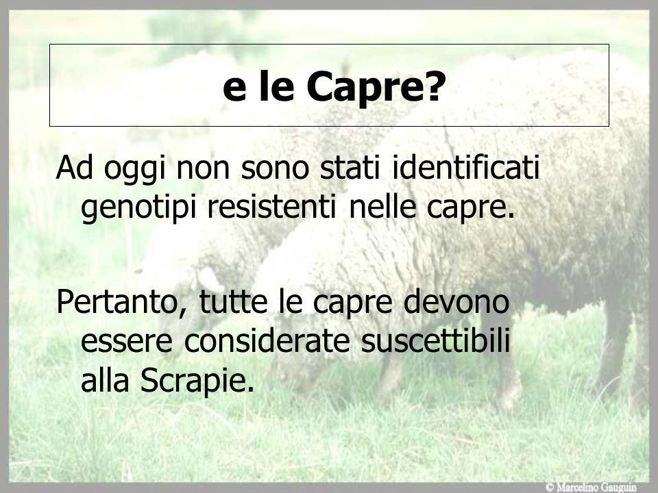 e le Capre Ad oggi non sono stati identificati genotipi resistenti nelle capre.