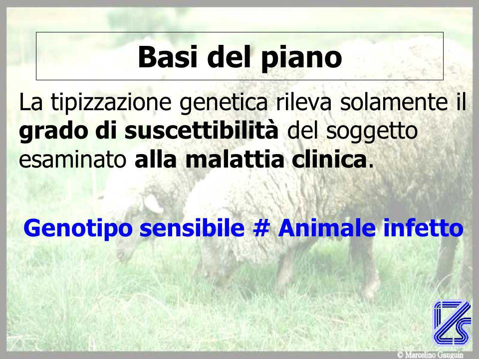 Genotipo sensibile # Animale infetto