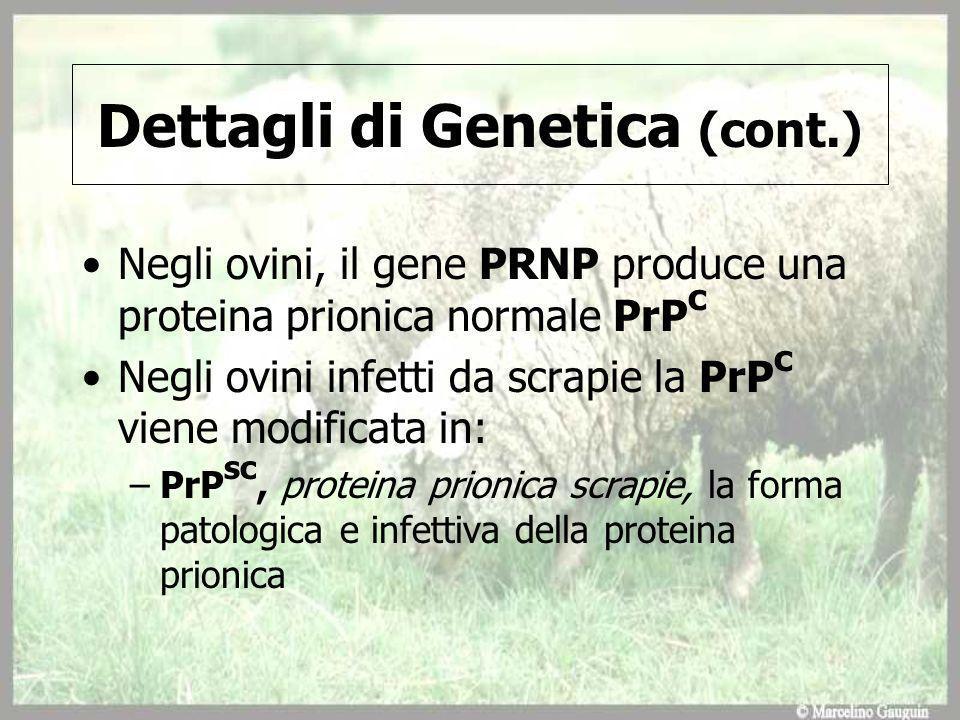 Dettagli di Genetica (cont.)