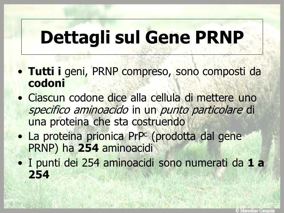 Dettagli sul Gene PRNP Tutti i geni, PRNP compreso, sono composti da codoni.