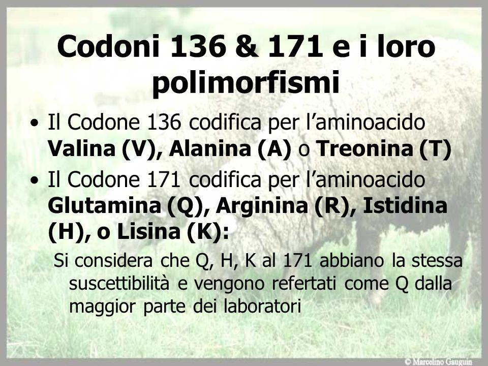 Codoni 136 & 171 e i loro polimorfismi