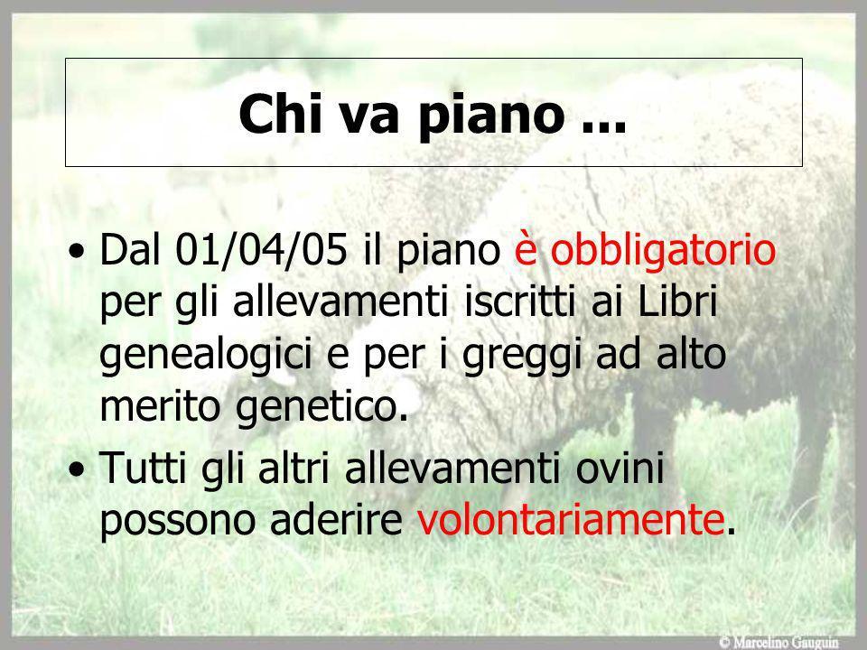Chi va piano ... Dal 01/04/05 il piano è obbligatorio per gli allevamenti iscritti ai Libri genealogici e per i greggi ad alto merito genetico.