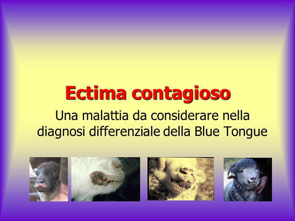Ectima contagioso Una malattia da considerare nella diagnosi differenziale della Blue Tongue