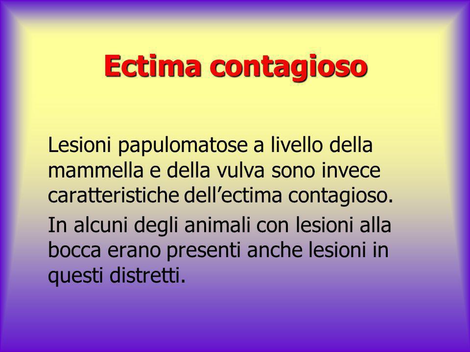 Ectima contagioso Lesioni papulomatose a livello della mammella e della vulva sono invece caratteristiche dell'ectima contagioso.
