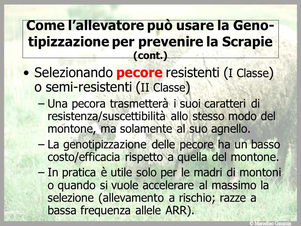 Come l'allevatore può usare la Geno-tipizzazione per prevenire la Scrapie (cont.)