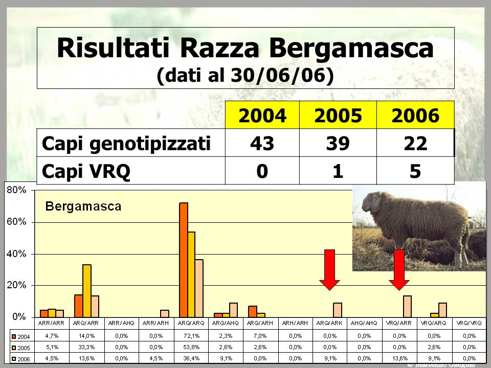 Risultati Razza Bergamasca (dati al 30/06/06)