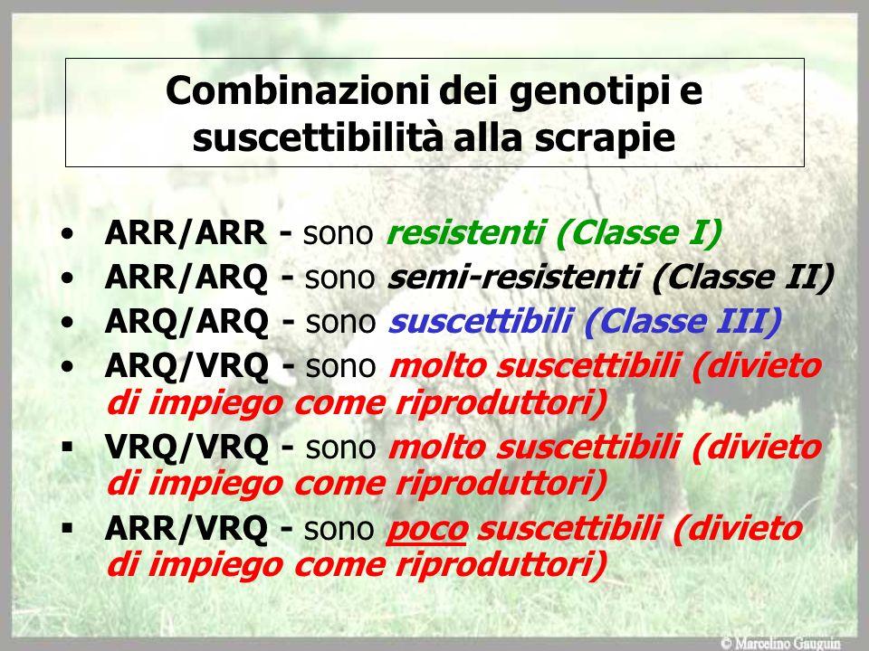 Combinazioni dei genotipi e suscettibilità alla scrapie