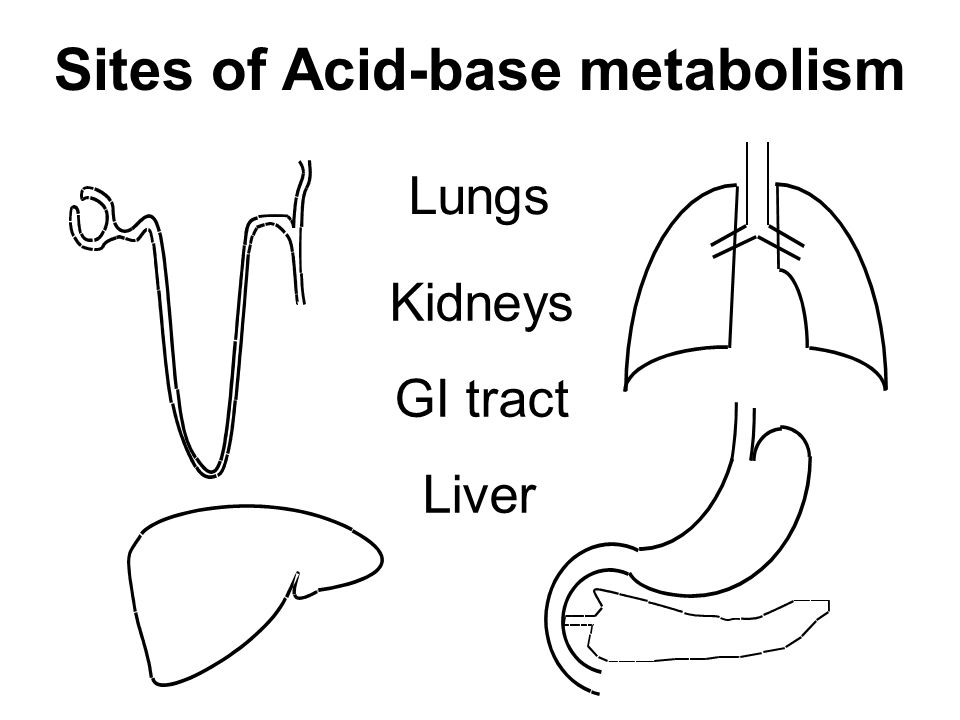 Sites of Acid-base metabolism