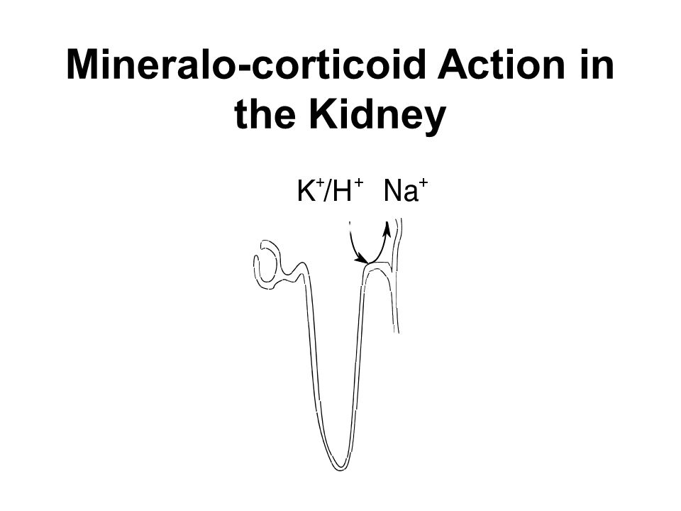 Mineralo-corticoid Action in the Kidney