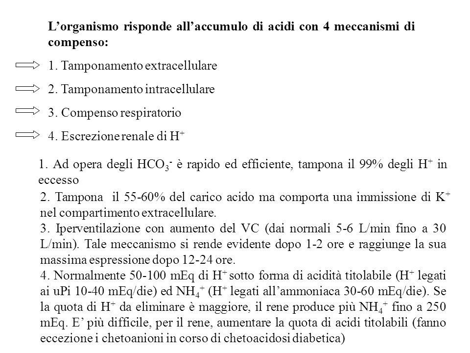L'organismo risponde all'accumulo di acidi con 4 meccanismi di compenso:
