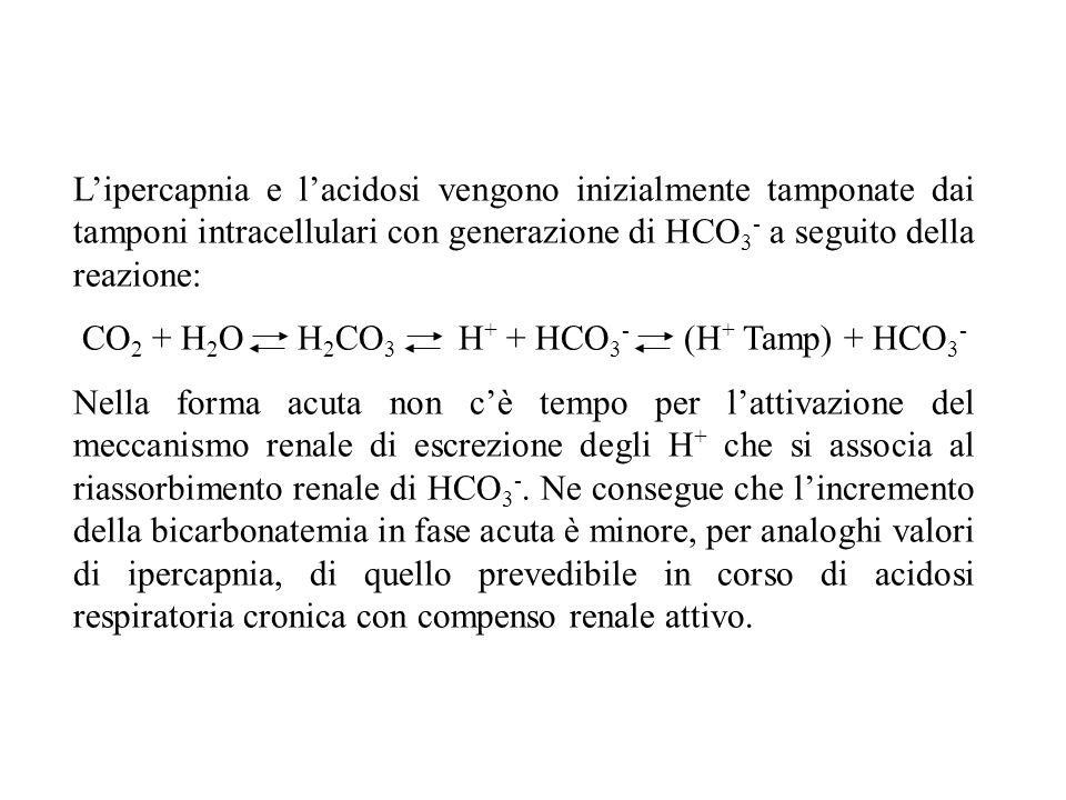 CO2 + H2O H2CO3 H+ + HCO3- (H+ Tamp) + HCO3-