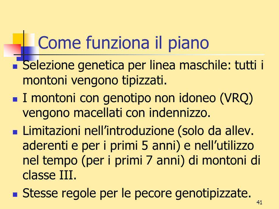 Come funziona il piano Selezione genetica per linea maschile: tutti i montoni vengono tipizzati.