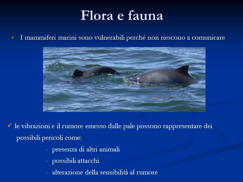 Flora e fauna I mammiferi marini sono vulnerabili perché non riescono a comunicare.