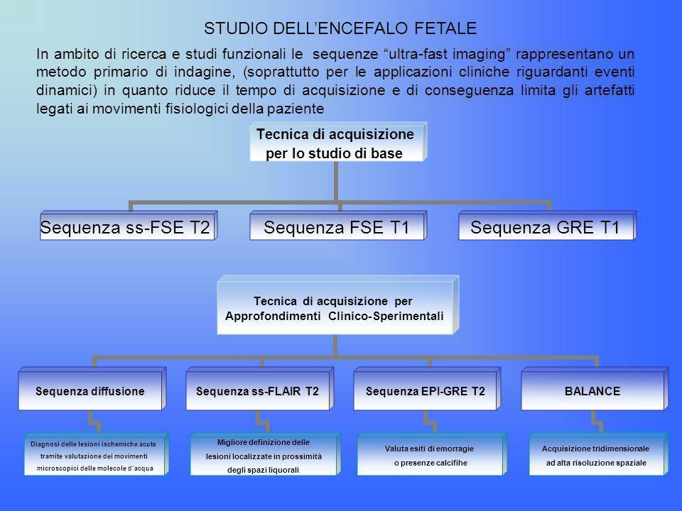 STUDIO DELL'ENCEFALO FETALE