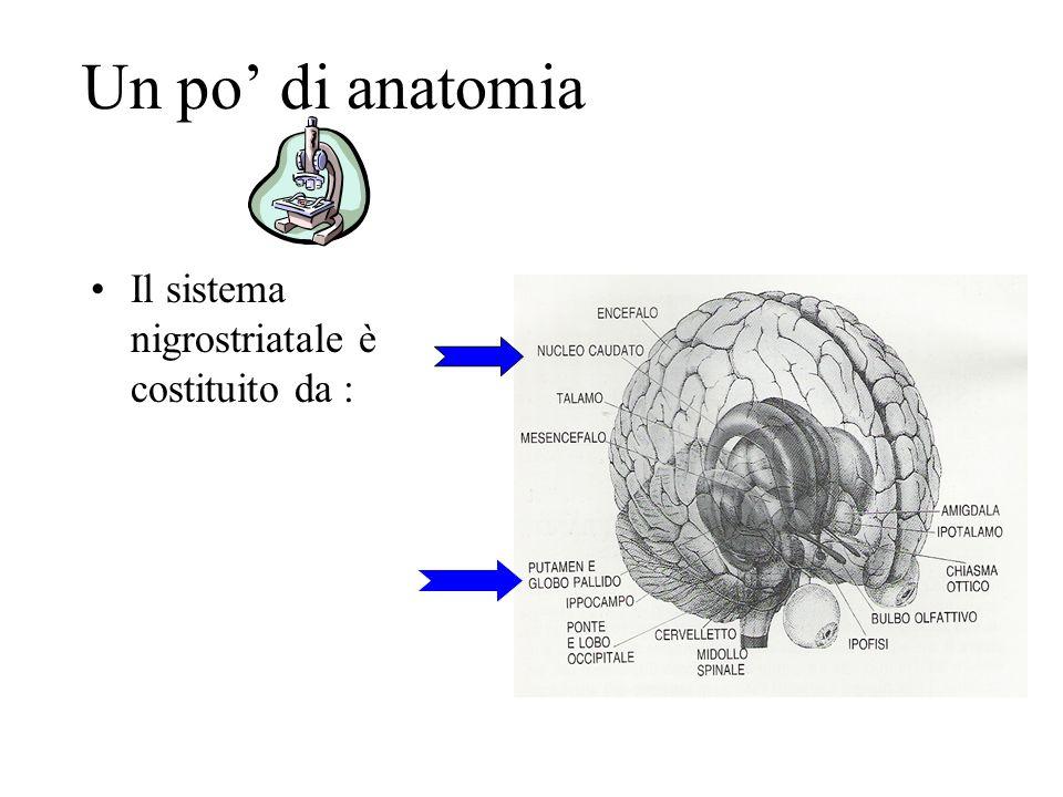 Un po' di anatomia Il sistema nigrostriatale è costituito da :