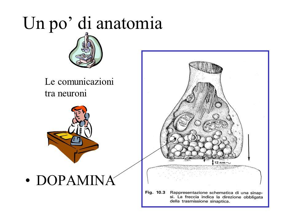 Un po' di anatomia Le comunicazioni tra neuroni DOPAMINA