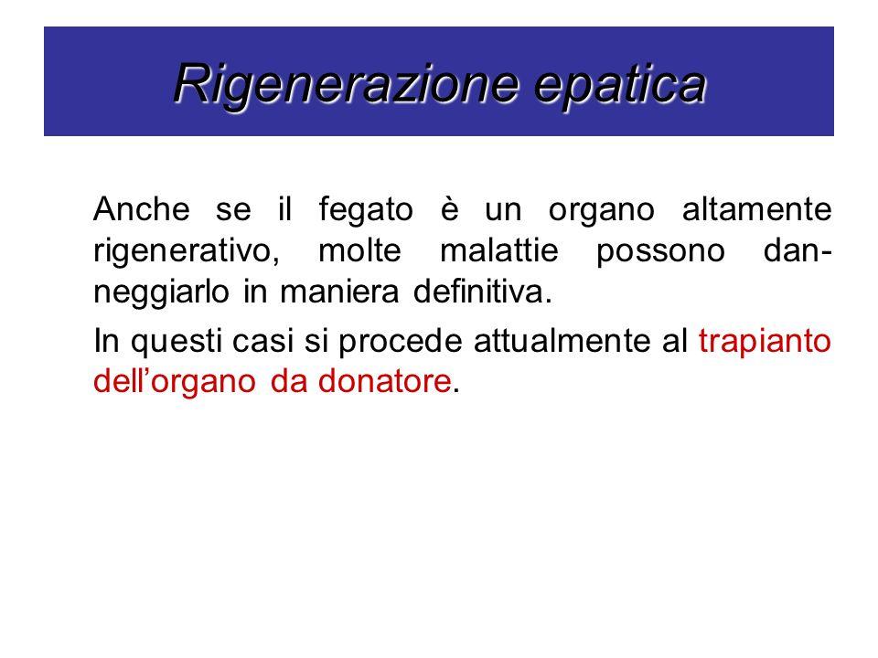 Rigenerazione epatica