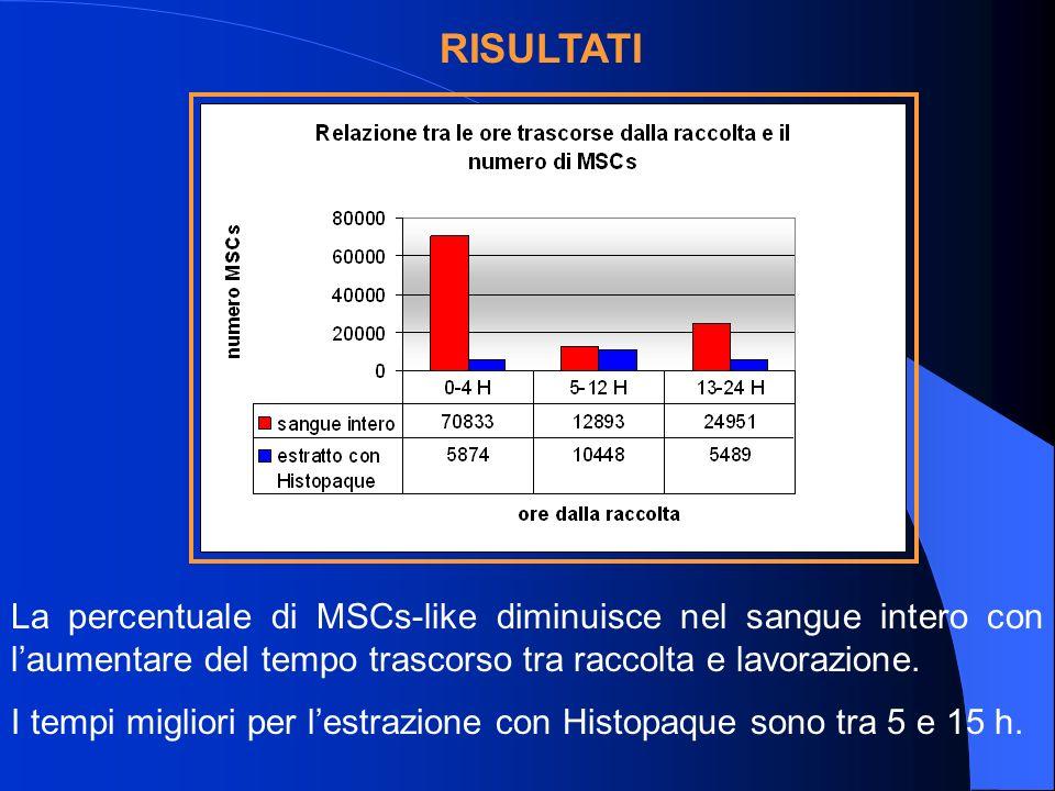 RISULTATI La percentuale di MSCs-like diminuisce nel sangue intero con l'aumentare del tempo trascorso tra raccolta e lavorazione.