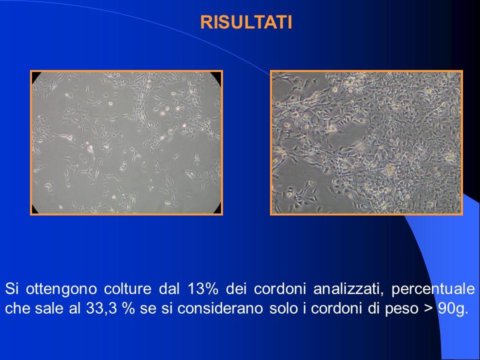 RISULTATI Si ottengono colture dal 13% dei cordoni analizzati, percentuale che sale al 33,3 % se si considerano solo i cordoni di peso > 90g.