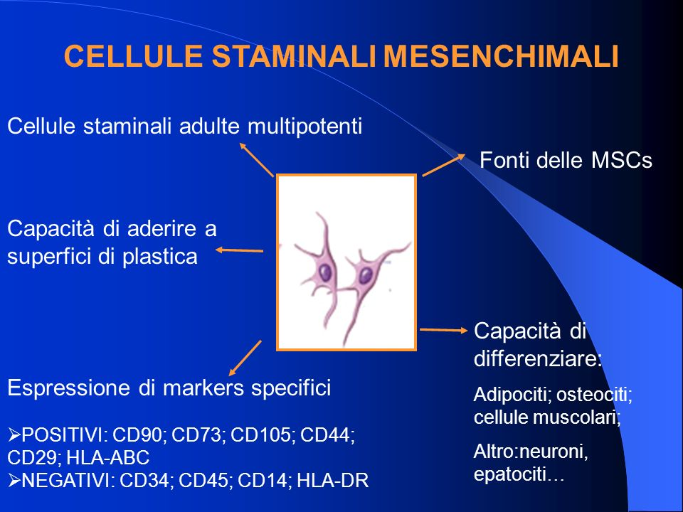 CELLULE STAMINALI MESENCHIMALI