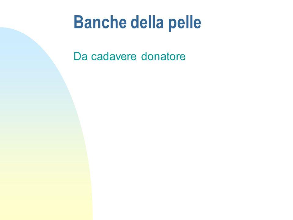 Banche della pelle Da cadavere donatore