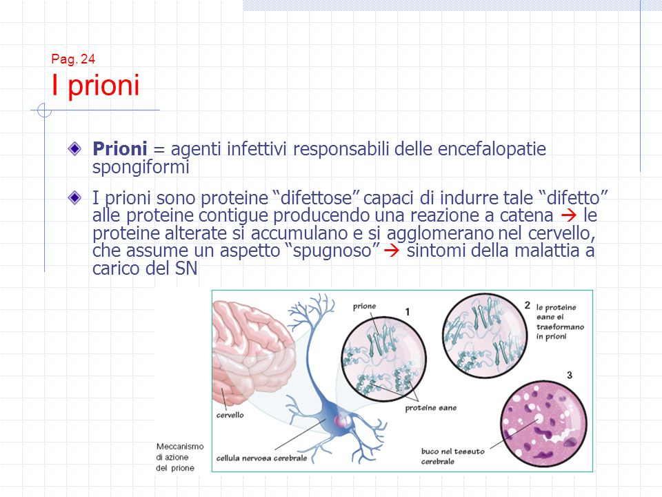 Prioni = agenti infettivi responsabili delle encefalopatie spongiformi
