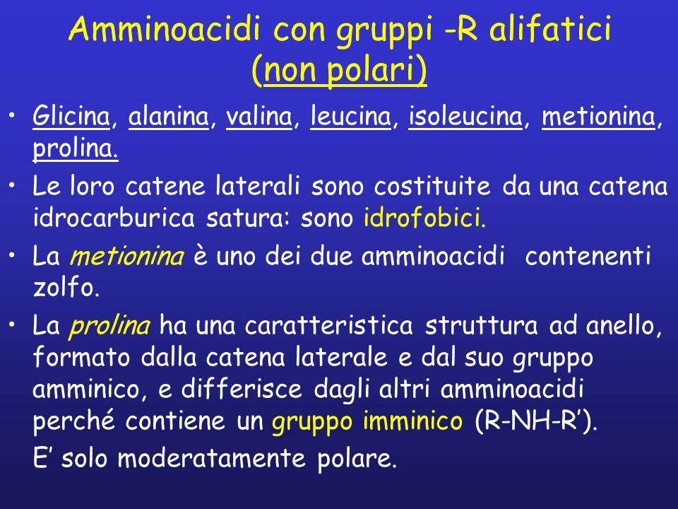 Amminoacidi con gruppi -R alifatici (non polari)