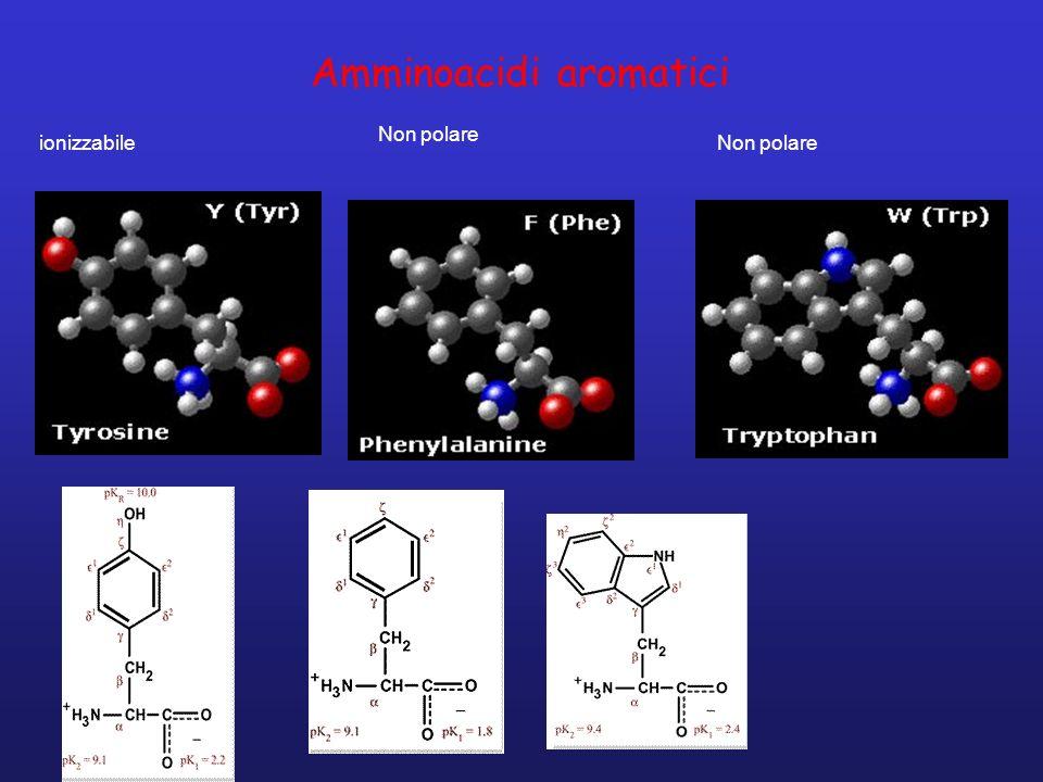 Amminoacidi aromatici