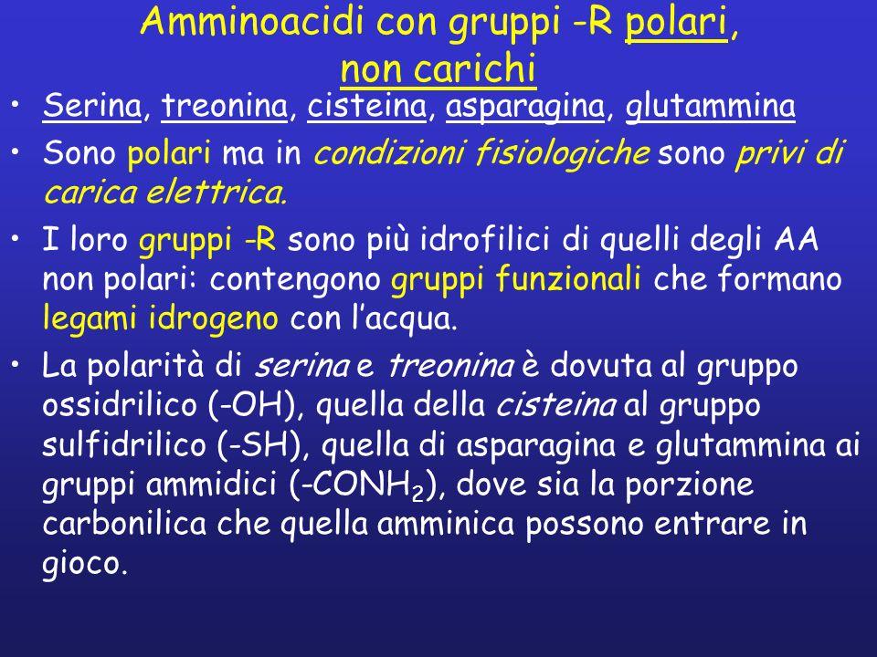 Amminoacidi con gruppi -R polari, non carichi