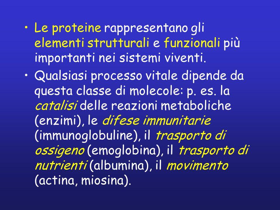 Le proteine rappresentano gli elementi strutturali e funzionali più importanti nei sistemi viventi.