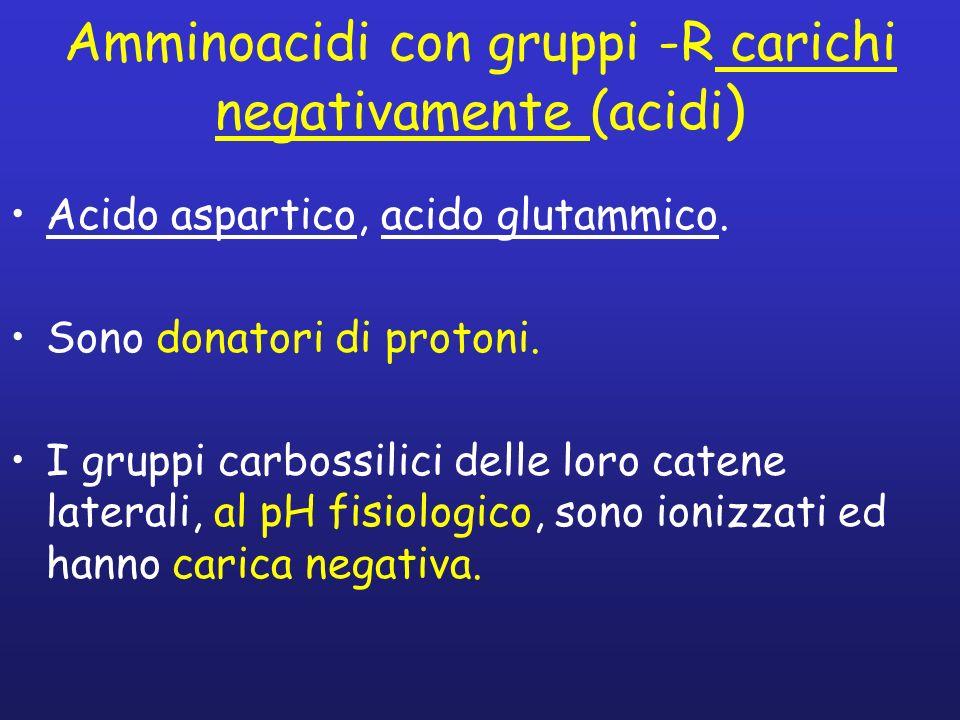 Amminoacidi con gruppi -R carichi negativamente (acidi)