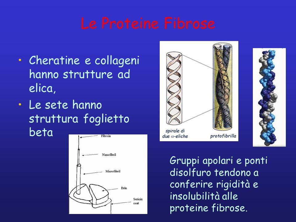 Le Proteine Fibrose Cheratine e collageni hanno strutture ad elica,