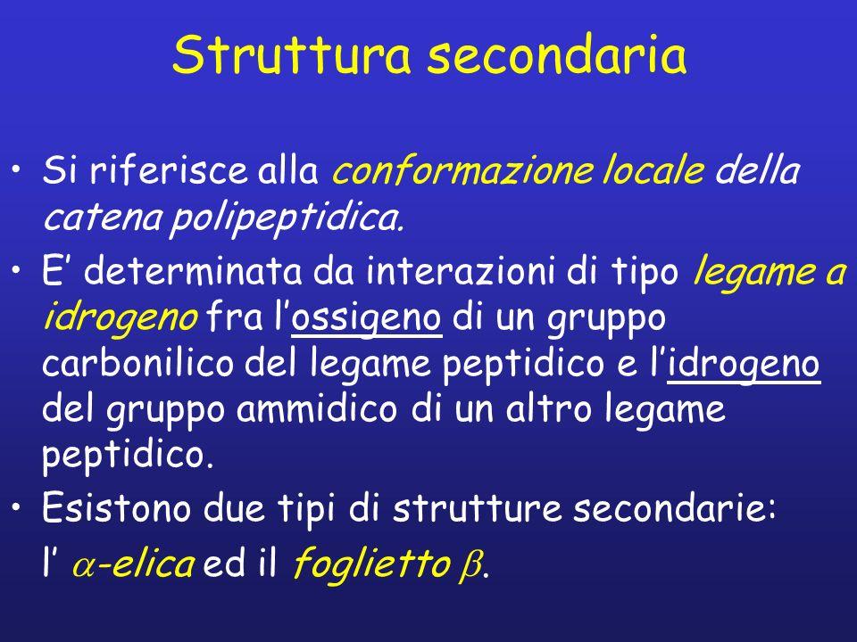Struttura secondaria Si riferisce alla conformazione locale della catena polipeptidica.