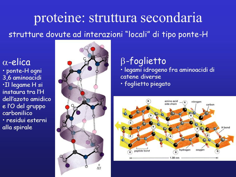 proteine: struttura secondaria