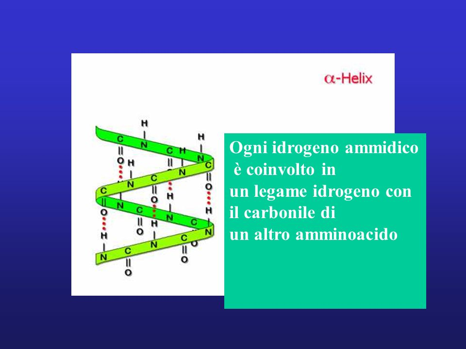 Ogni idrogeno ammidico
