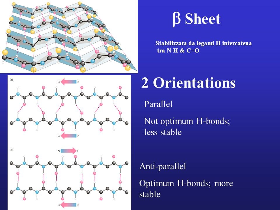 b Sheet 2 Orientations Parallel Not optimum H-bonds; less stable