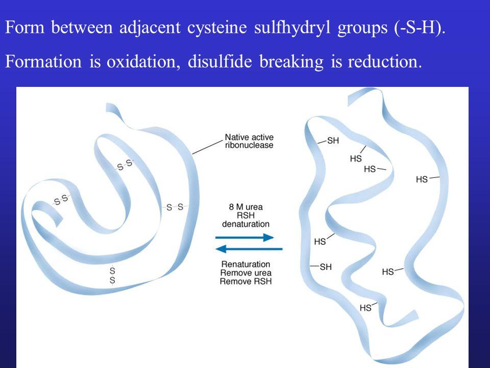 Form between adjacent cysteine sulfhydryl groups (-S-H).