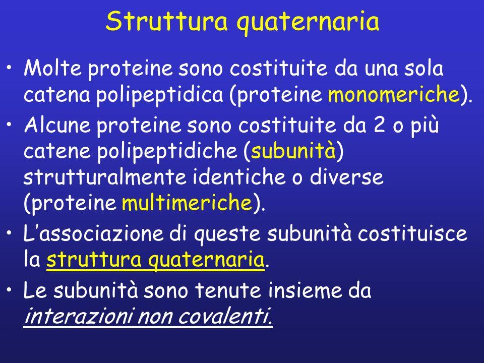 Struttura quaternaria