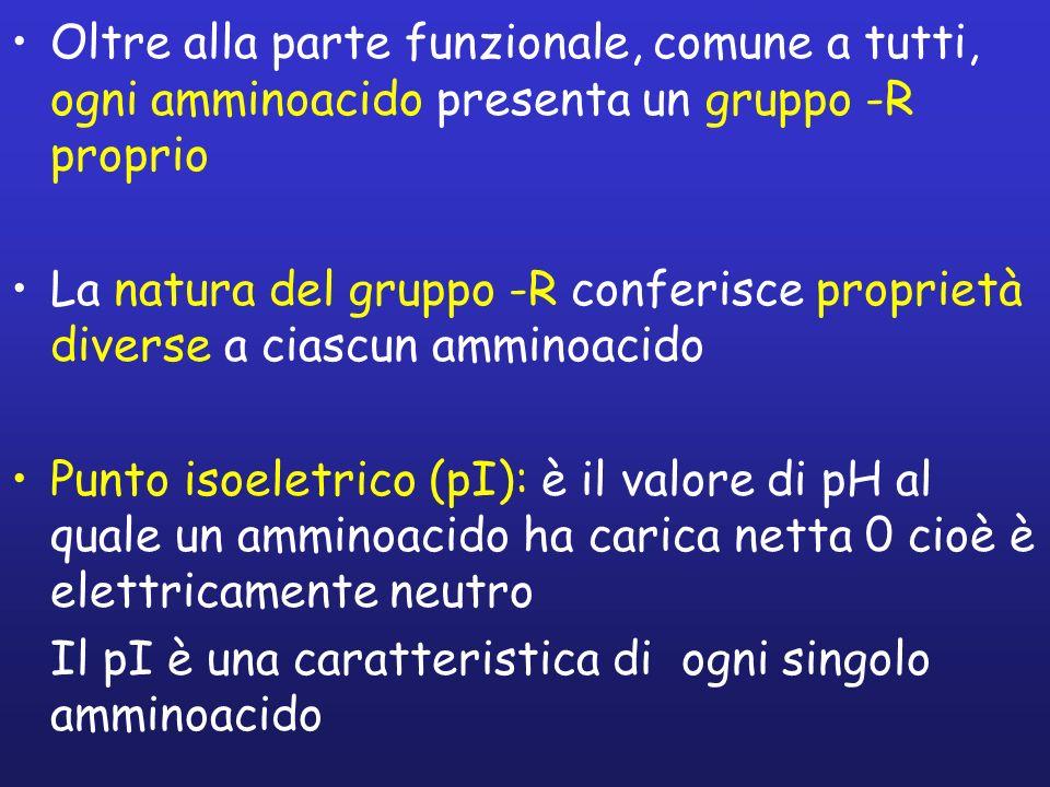 Oltre alla parte funzionale, comune a tutti, ogni amminoacido presenta un gruppo -R proprio